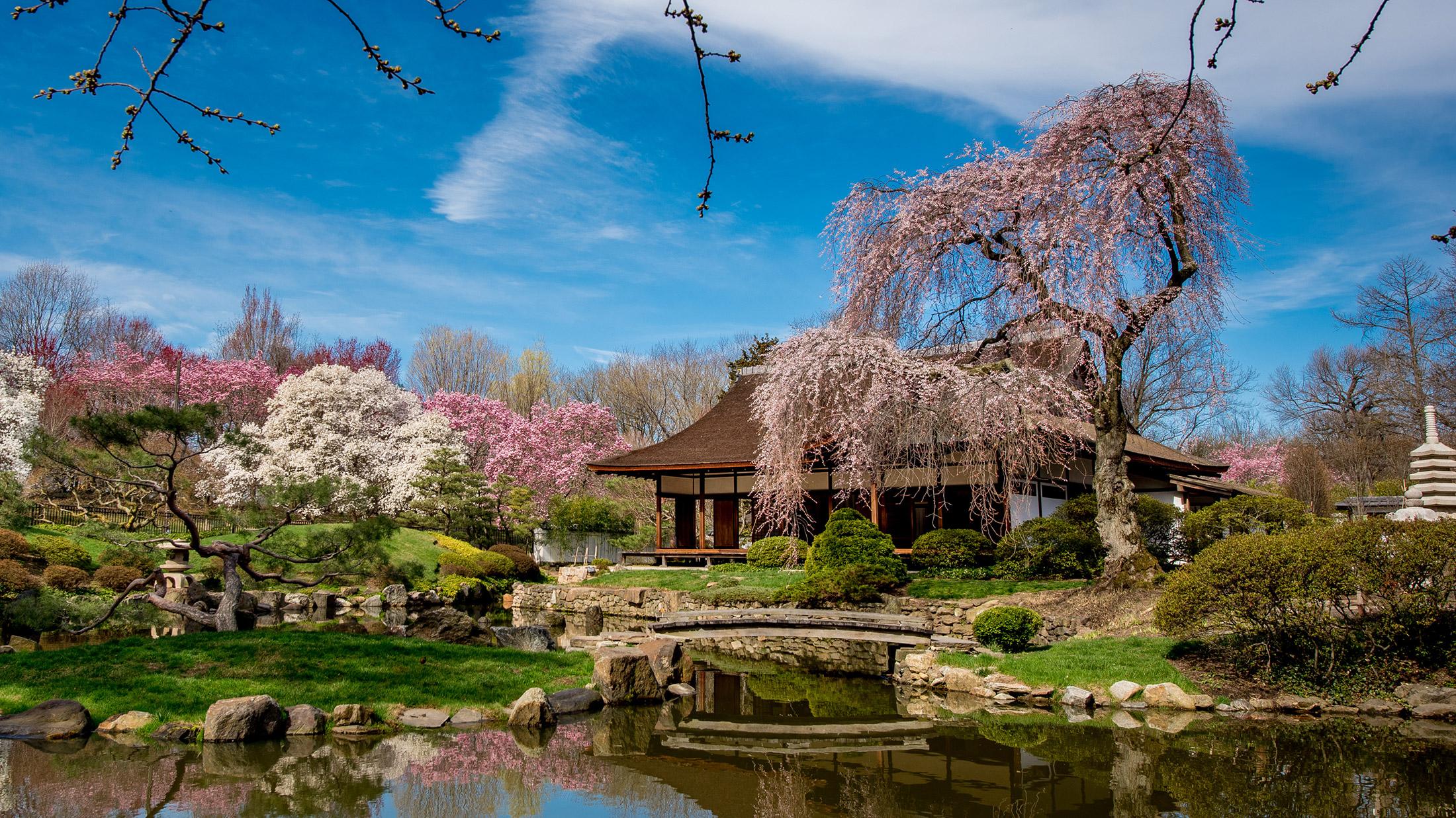 Philadelphia Cherry Blossom Festival 2020.The Subaru Cherry Blossom Festival Of Greater Philadelphia